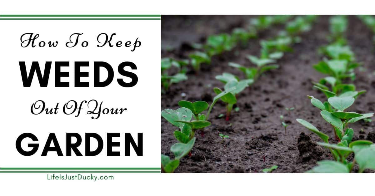 Weeds Go Away Naturally, Weed Control In Vegetable Garden