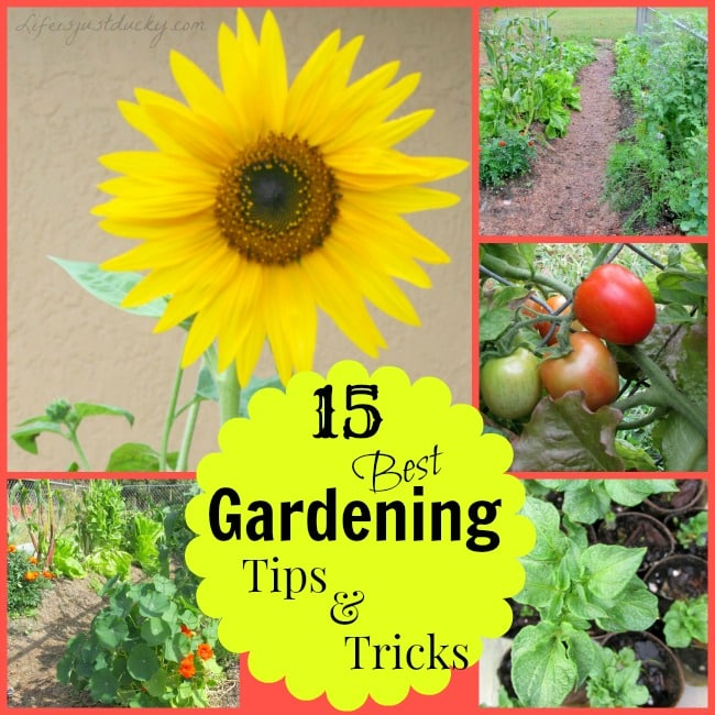 15 best vegetable gardening tips life is just ducky for Gardening tips