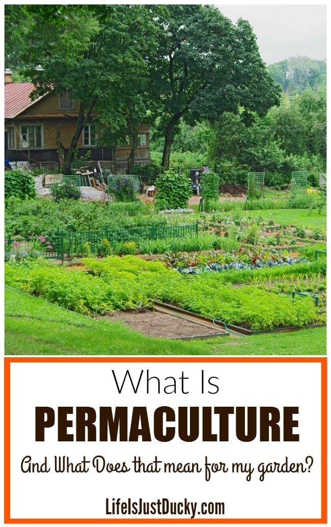 Permaculture And Food Forest Gardens Native Plant Talk: What Is Permaculture And Is It Right For Your Garden