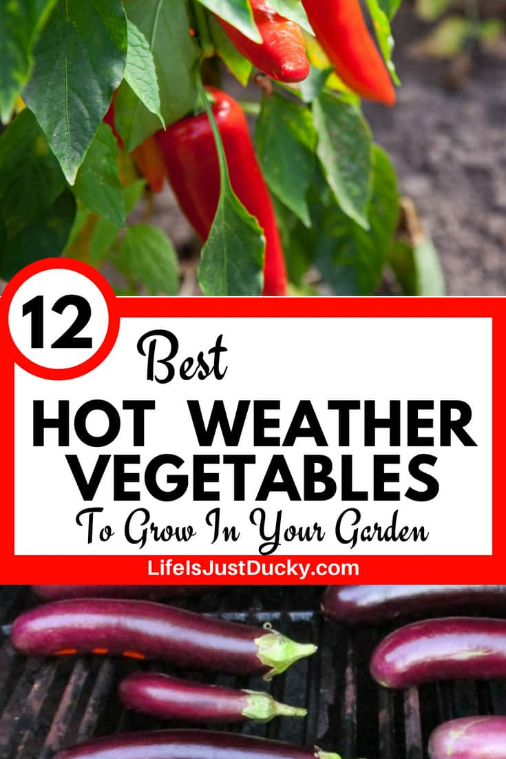 12 Best Hot Weather Vegetables To Grow In Your Garden Life Is Just Ducky